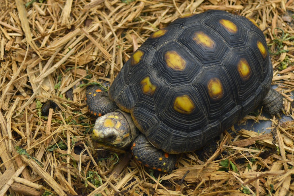 Valley Exotics Zoo - DSC_7053.JPG