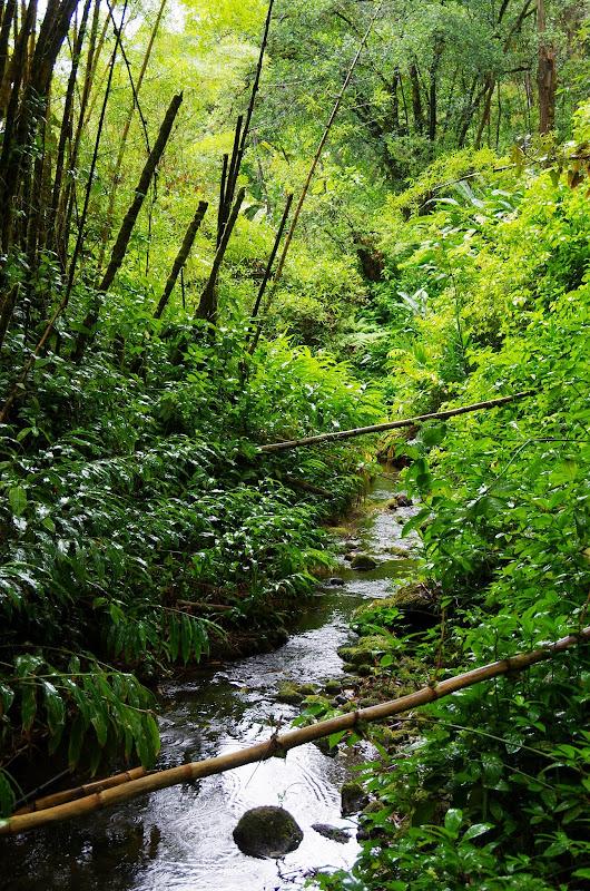06-23-13 Big Island Waterfalls, Travel to Kauai - IMGP8836.JPG