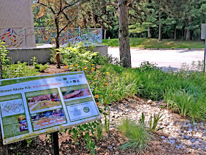 Photo: One of our many public #rainscapes, Green Glade School shows folks that rain water handling can be ornamental as can drought tolerant planting. Created in association with Credit Valley Conservation and Aquafor Beech.