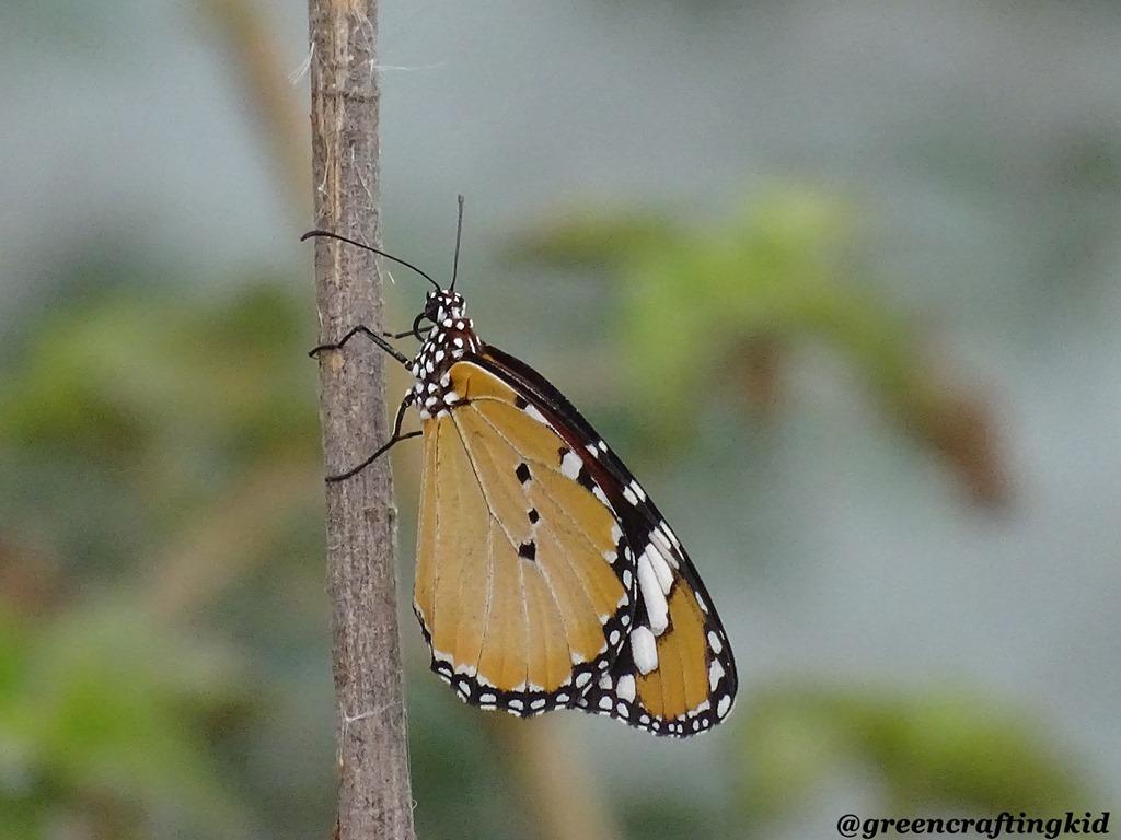 [Butterfly1%5B2%5D]