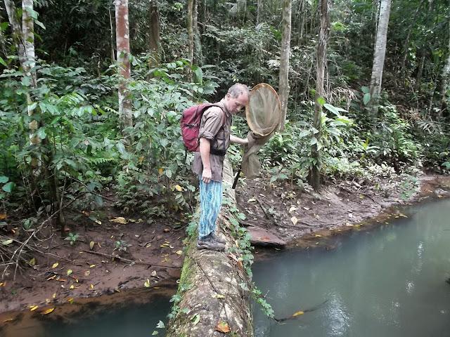 En forêt. Pulau Obi (Moluques), 13 septembre 2013. Photo : Eko Harwanto