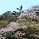 2014 Japan - Dag 7 - tom-SAM_0429-0003.JPG