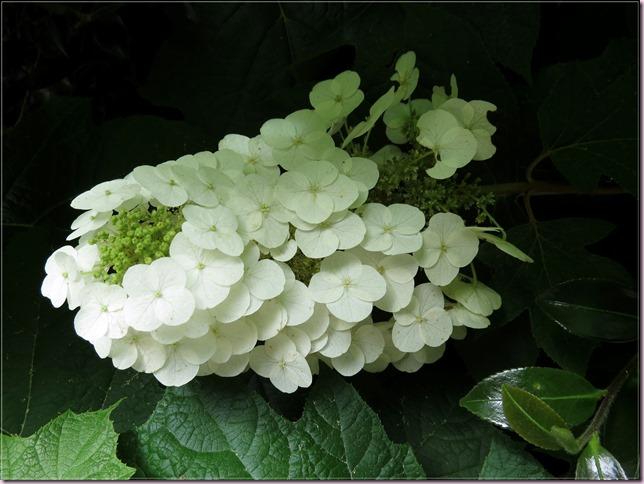 flowerIMG_6450