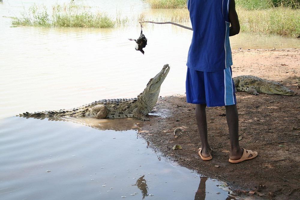 bazoule-crocodiles-4