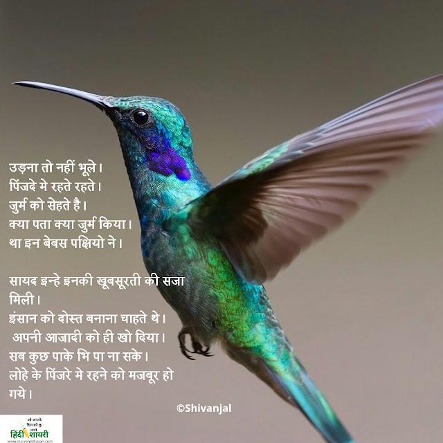 Aajadi, panchi, chidiya, chidiya image