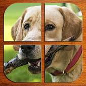 Dogs jigsaw puzzles (FREE)