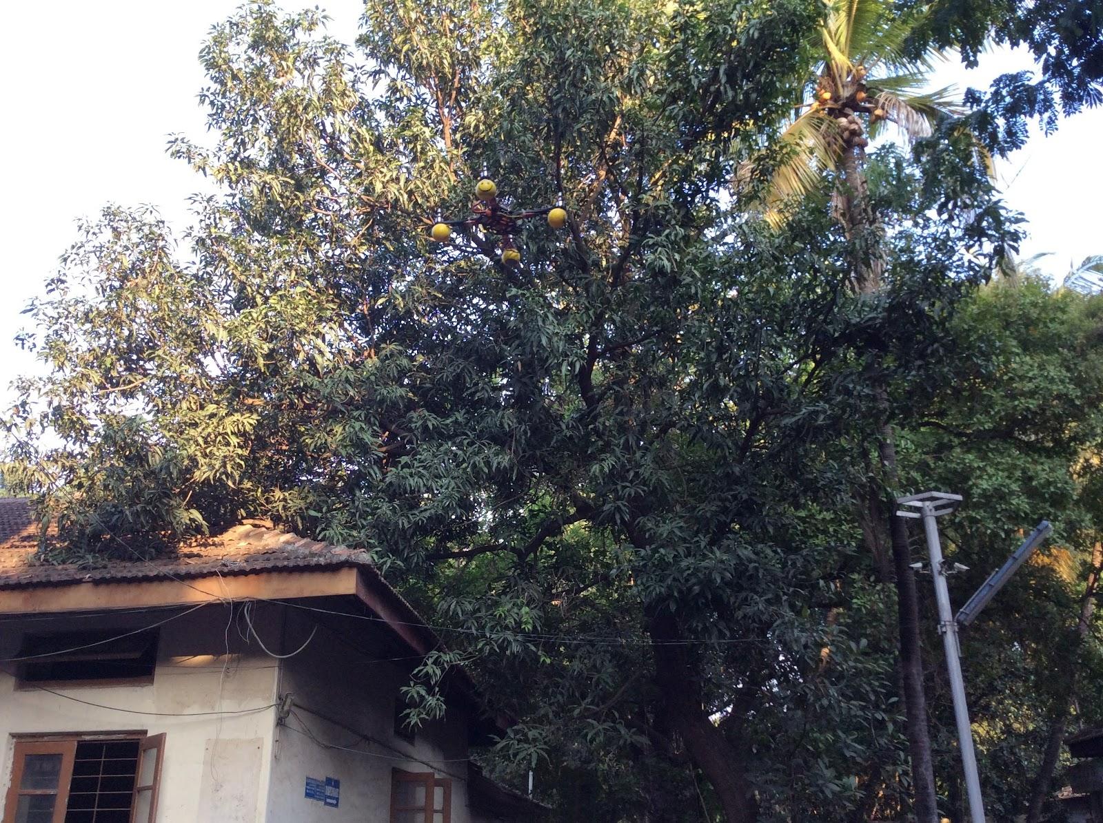 Nowrosejee Wadia College, Pune Robolab (3).jpg