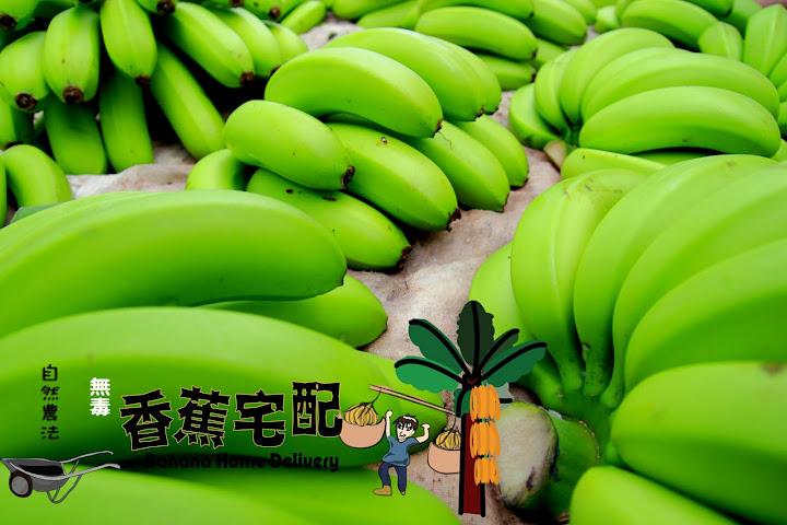 台青蕉希望蕉園-自然農法香蕉宅配