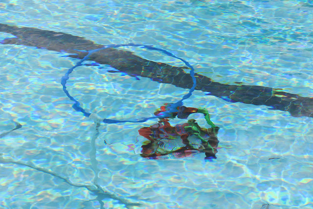 SeaPerch Competition Day 2015 - 20150530%2B08-33-18%2BC70D-IMG_4730.JPG