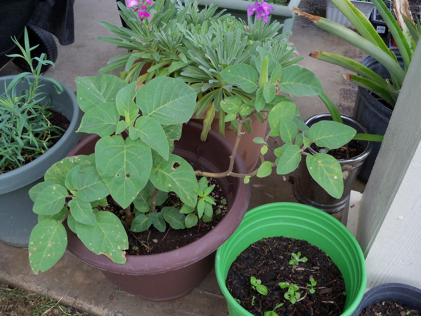 Gardening 2012 - 115_1401.JPG