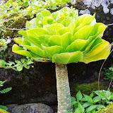 06-26-13 National Tropical Botantial Gardens - IMGP9450.JPG