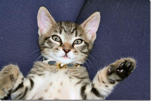 22 fotos de gats (7)
