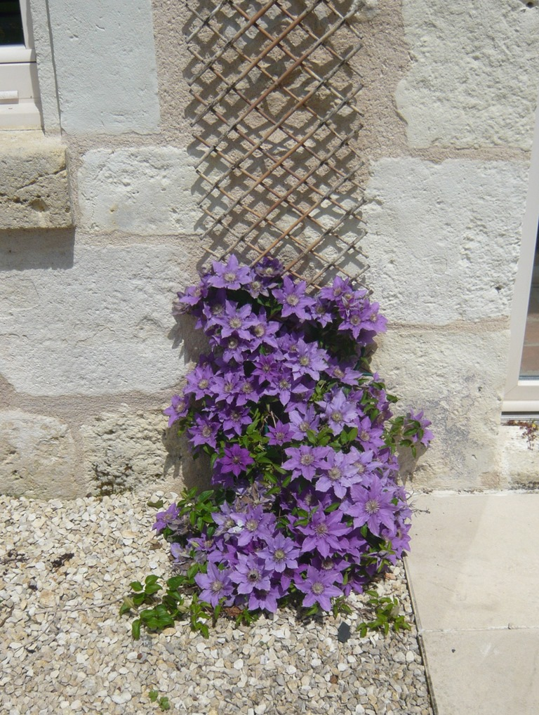 [Spring+flowers9v%5B4%5D]