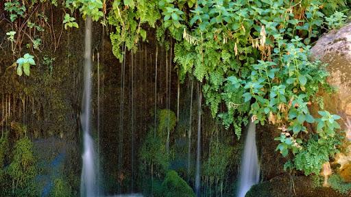 Lush Foliage, Zion National Park, Utah.jpg