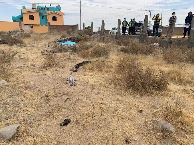 PERROS HABRÍAN ATACADO A VARÓN PROVOCANDO SU MUERTE EN TERRENO DE CHARACATO