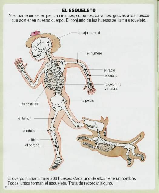 el cuerpo humano partes organos cuidados higiene cuerpo humano