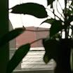 AAS Building window