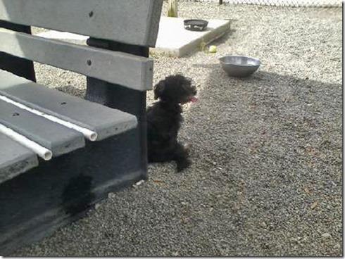 Tarpon Doggie Park Chloe1