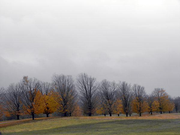 Winter Selections - IMG_9103.jpg