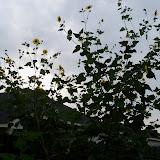 Gardening 2013 - 115_7235.JPG