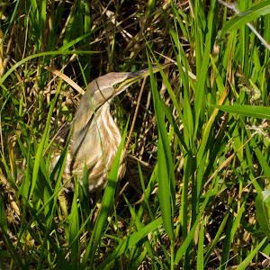 Everglades National Park: Flamingo