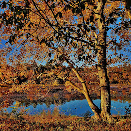Cash Lake Autumn Scene 2018 by Matthew Beziat - Landscapes Waterscapes ( fall, maryland, prince george's county, autumn, patuxent research refuge, patuxent research refuge south tract, cash lake,  )