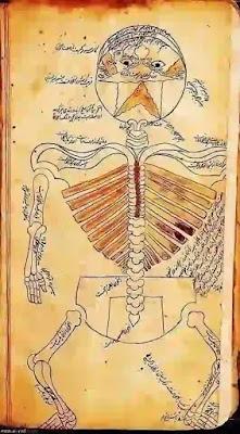 أول كتاب تشريح جسم الإنسان كاملًا  ألفه الطبيب المسلم منصور بن محمد بن إلياس