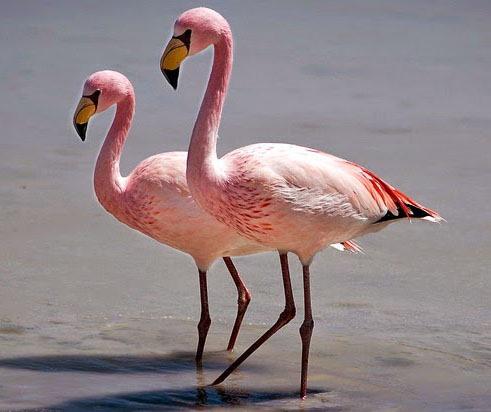 [Flamingo-de-James5]