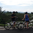 Bali by Pedals - Bali cycling tours on Jatiluwih rice paddy.