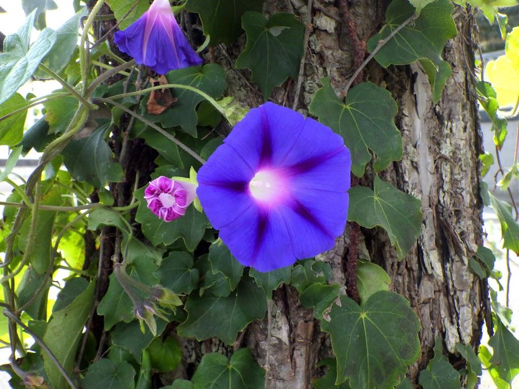花の写真、紫系3