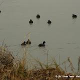 01-26-13 White Rock Lake - IMGP4333.JPG