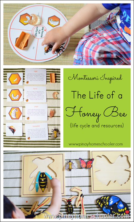 Montessori Honey Bee
