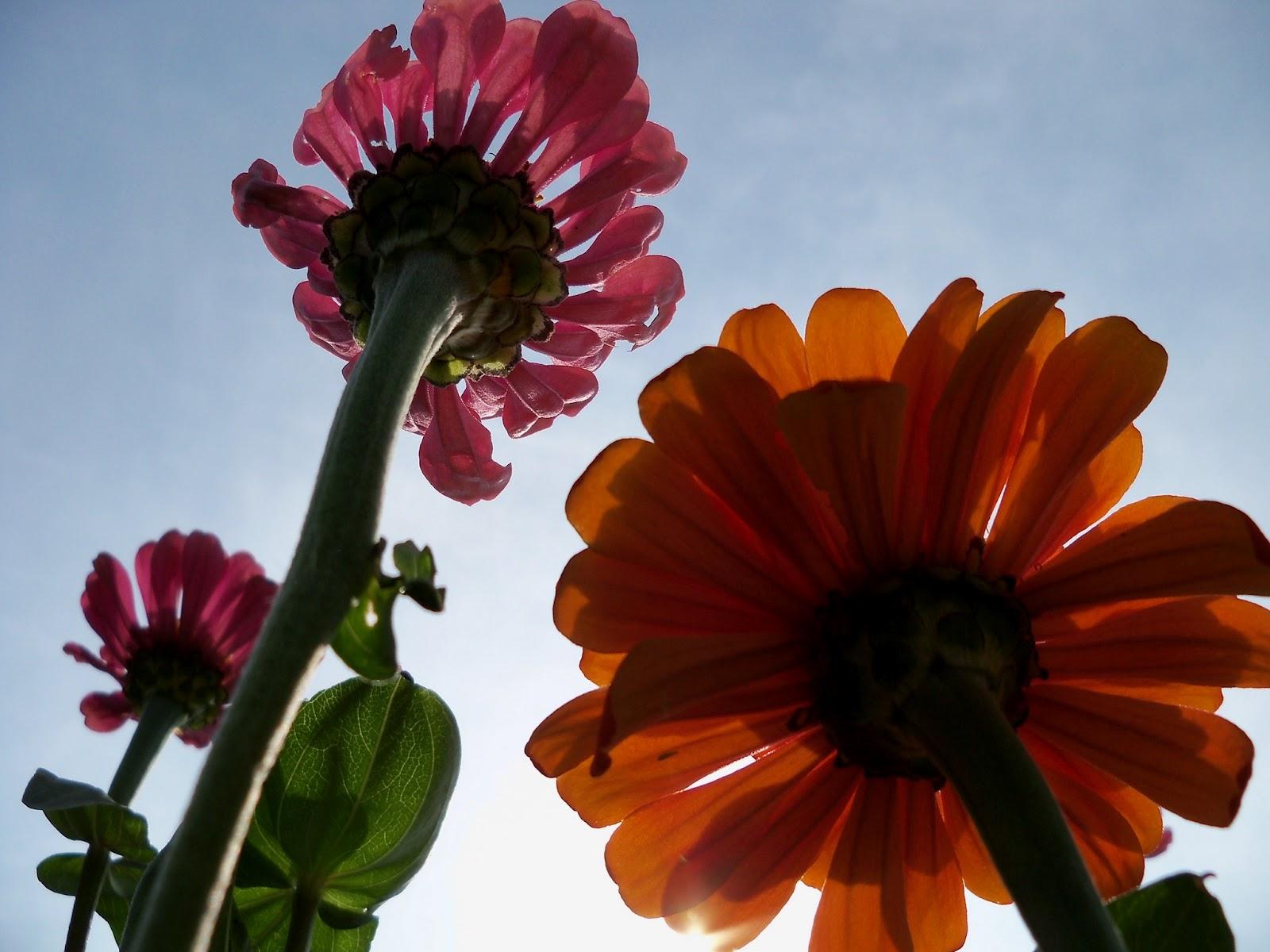Gardening 2011 - 100_8643.JPG