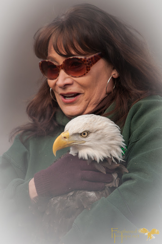 Marge Gibson of Raptor Education Group Inc craddling a rehabilitated bald eagle just moments before release it back into the wild at Sauk City Bald Eagle Days 2013. Photo by Lisadawn Schram/Feathered Hope.Net