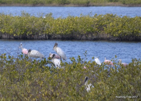 Wood Storks and Roseate Spoonbills