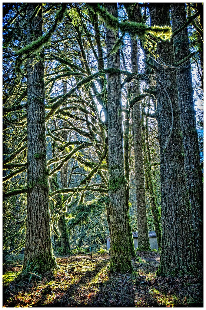 """Backlit Elwha Moss"" by Tim O'Neill - Honorable Mention A General"