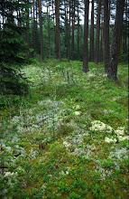 Photo: entlang der Wildnisstraße an der schwedischen Grenze