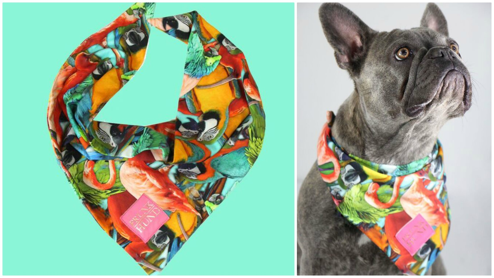 BEAUTIFUL FASHIONABLE PETS WOMEN CAN OWN IN THEIR HOME TO ENJOY 7