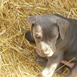 Star & True Blues February 21, 2008 Litter - HPIM1217.JPG