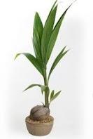 Proposicion de inversion: Invierte tu planta de frutas, has del mundo una frutería y crecerá tu bolsillo de forma pasiva.