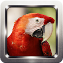 Parrot Bird Wallpapers icon