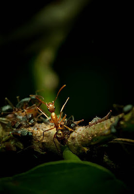 चींटी - anokhagyan.in