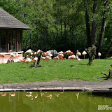 52_Tierpark-Nürnberg_06.05.16_©AlexanderLanzloth.jpg