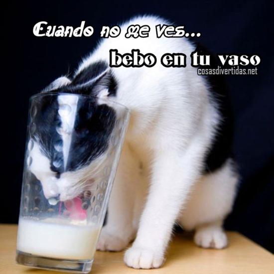 [gato+bebe+en+tu+vaso%5B2%5D]