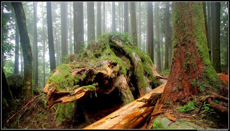 特富野古道樹木