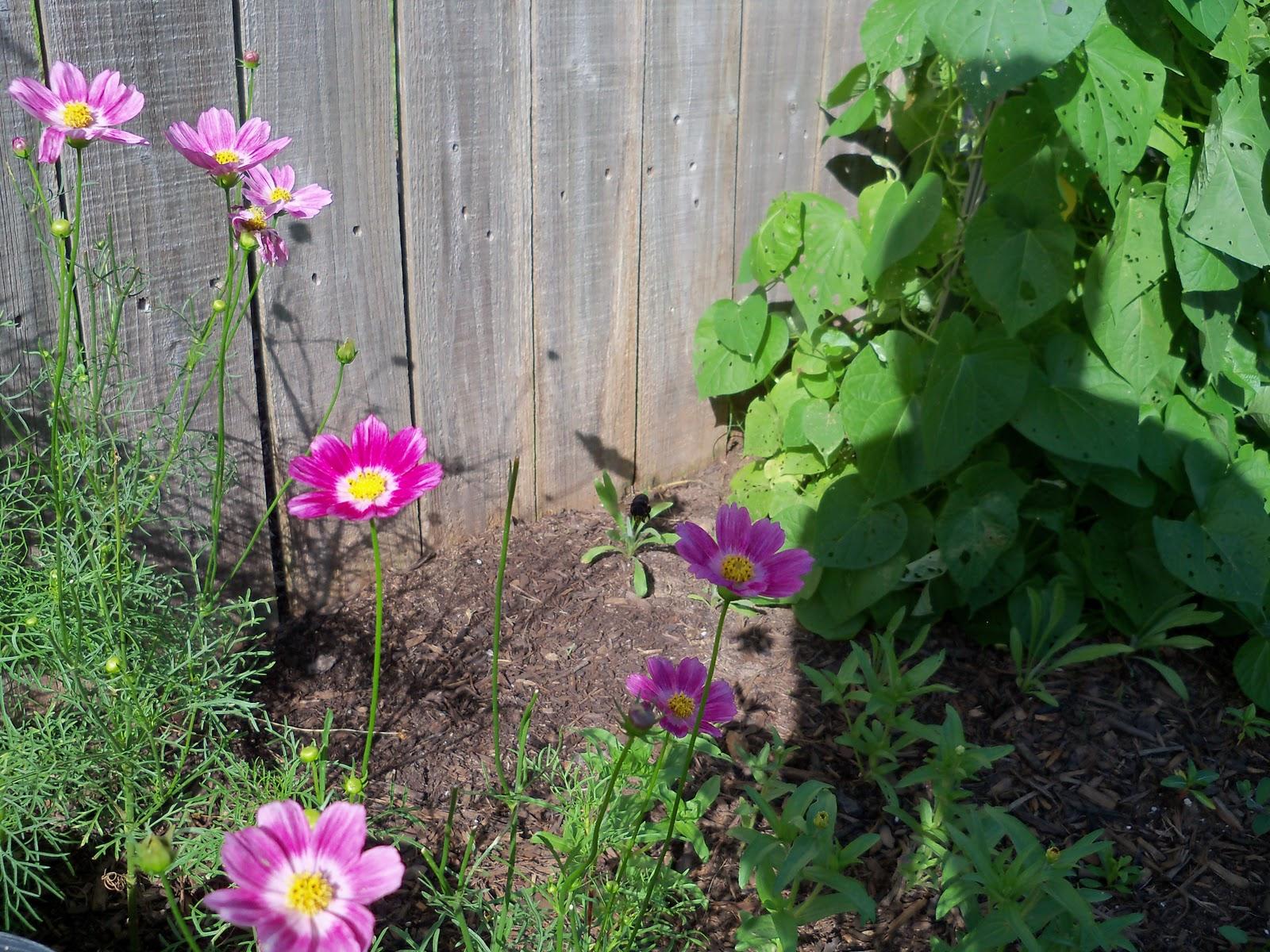 Gardening 2010, Part Two - 101_2493.JPG