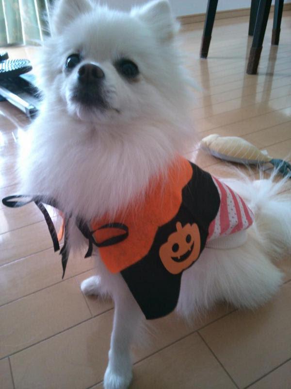 halloween-costume-pet03.jpg