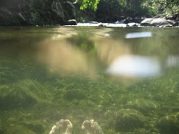 Swimming in the creek.