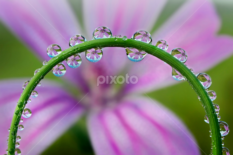 Natural Architecture by Alberto Ghizzi Panizza - Abstract Water Drops & Splashes ( circles, spere, lilac, arc, drop, dew, flower, drops,  )