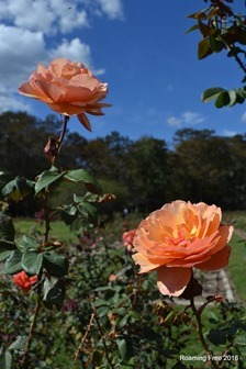 A beautiful day in the Rose Garden